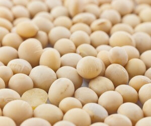Macro (close-up) of soya beans filling whole frame.